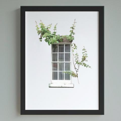 Window With Ivy A4 Print