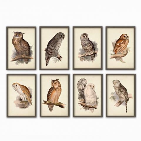 Eight Owls Print Set